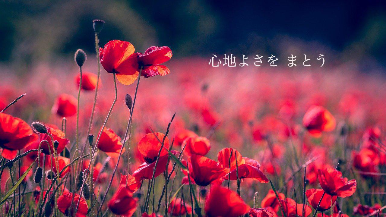 horizon-768759_1280.jpg